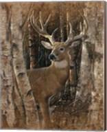 Whitetail Deer - Birchwood Buck Fine-Art Print