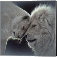 White Lion Love Fine-Art Print