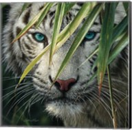 White Tiger Bamboo Forest Fine-Art Print