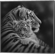 Tiger Mother and Cub - Cherished - B&W Fine-Art Print