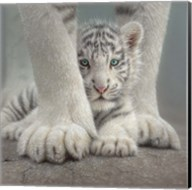 White Tiger Cub - Sheltered Fine-Art Print