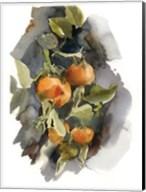 Peaches I Fine-Art Print