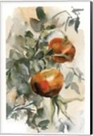 Peaches III Fine-Art Print