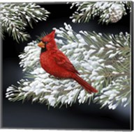 Night Cardinal Fine-Art Print