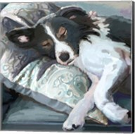 Couch Collie Fine-Art Print