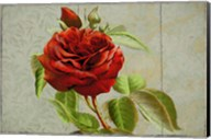 Red Rose Painted on Wooden Panel Fine-Art Print
