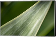 Agave Abstract 1 Fine-Art Print