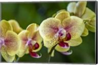 Exotic Orchid 01 Fine-Art Print
