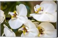 Exotic Orchid 02 Fine-Art Print
