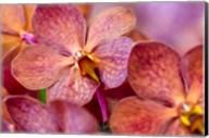 Exotic Orchid 05 Fine-Art Print