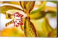 Exotic Orchid 10 Fine-Art Print