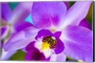 Exotic Orchid 11 Fine-Art Print