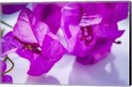 Purple Flower 2 Fine-Art Print