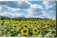 Sunflower Field Against Sky 02 Fine-Art Print
