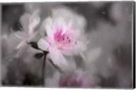 Pink Azalea Fine-Art Print