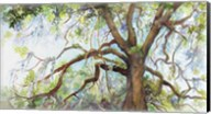 Southern Live Oak Tree Fine-Art Print