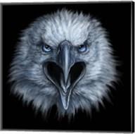 Eagle Face Fine-Art Print
