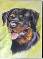 Rotty Dog 1 Fine-Art Print