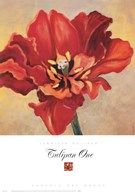Tulipan One Fine-Art Print