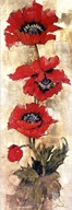 Strand of Poppies II Fine-Art Print