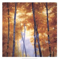 Blue Wood Canopy Fine-Art Print