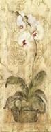 Esprit Phalaenopsis Panel Fine-Art Print