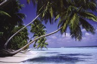 Palm Trees Leaning Fine-Art Print