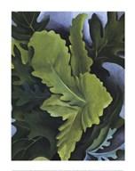 Green Oak Leaves Fine-Art Print