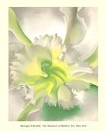 An Orchid Fine-Art Print