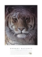Tiger Portrait Fine-Art Print