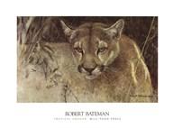 Tropical Cougar Fine-Art Print