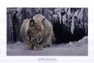 Dozing Lynx (detail) Fine-Art Print