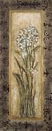 Paperwhites II Fine-Art Print