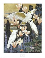 Cockatoos Fine-Art Print