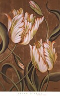 A Cappella II Fine-Art Print