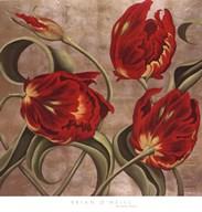 Scarlet Arabesque Fine-Art Print