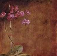 Orchid Series II (Simplicity II) Fine-Art Print