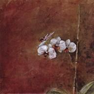 Orchid Series III (Simplicity III) Fine-Art Print