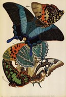 Collection III Fine-Art Print