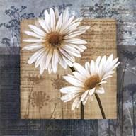 Daisy Field II Fine-Art Print