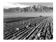 Farm Workers and Mt. Williamson Fine-Art Print