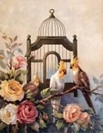 Cockatiel and Roses Fine-Art Print
