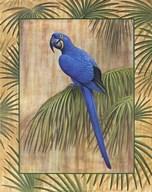 Hyacinth Macaw Fine-Art Print