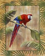 Scarlet Macaw Fine-Art Print