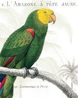 Parrot Botanique I Fine-Art Print