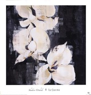 Shadow Orchids II Fine-Art Print