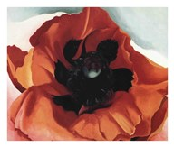 Poppy Fine-Art Print