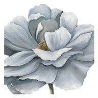 Blue Silken Bloom Fine-Art Print