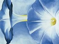 Blue Morning Glories Fine-Art Print