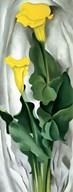 Yellow Calla Fine-Art Print